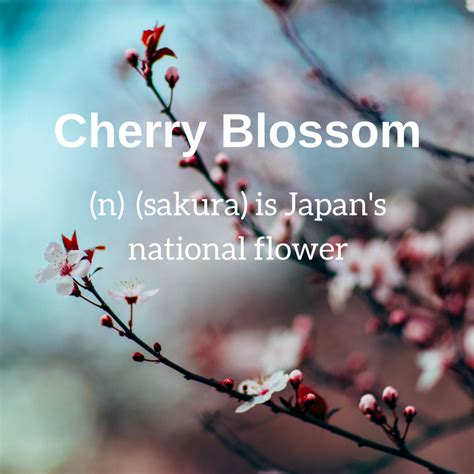 cherry blossom facts 5 japan fun facts you didn t know or might know weblioph