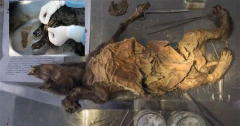 year  ice age puppies  preserved  russian permafrost