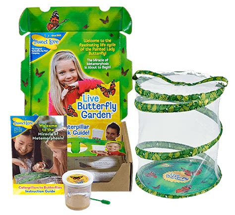 butterfly garden kit insect lore live caterpillars butterflies insects and