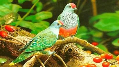 Birds Colorful Desktop 2880 1800 Wallpapers13 Resolution
