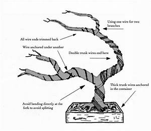 17 best ideas about bonsai plants on pinterest bonsai for Wiring cedar bonsai
