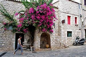 213 best images about Bountiful Bougainvillea on Pinterest ...