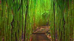 Bamboo HD Wallpaper, Picture, Image