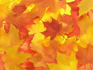 Fall Leaves Background - HD wallpapers | Download ...