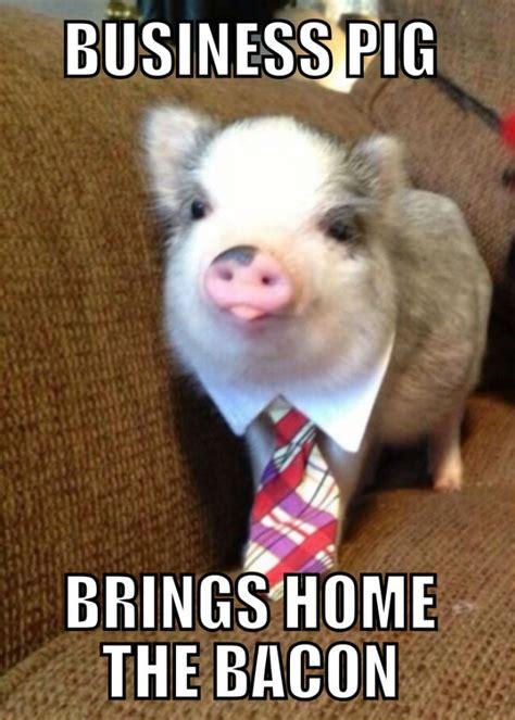 Piglet Meme - business pig cell staff