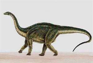 Riojasaurus Dinosaur Pictures - pictures of riojasaurus