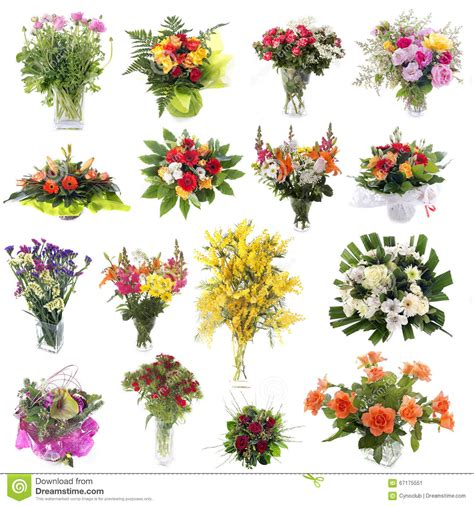 nomi di fiori nomi dei fiori di co nomi dei fiori di co nomi dei fiori