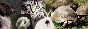 Haustiere Für Kinder : haustiere f r kinder in kurzportraits auf pferdchen4kids ~ Orissabook.com Haus und Dekorationen