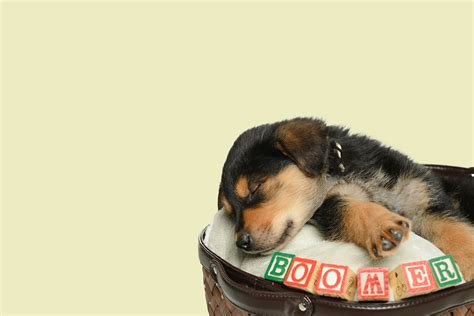 syllable dog names popular male  female names wag