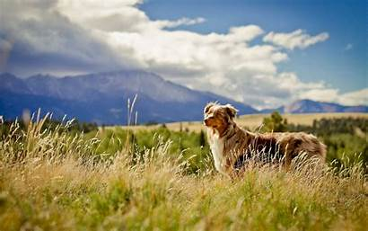 Dog Field Dogs Grass Open Wallpapers Background