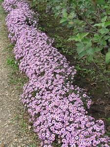 Plante De Bordure : bordure paris c t jardin ~ Preciouscoupons.com Idées de Décoration