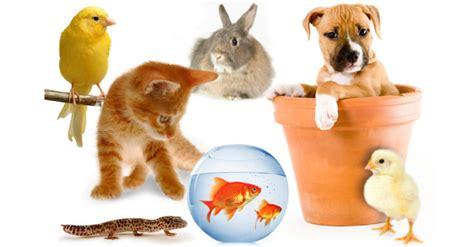 pat les animaux de compagnie animalerie les animaux de compagnie et leur alimentation