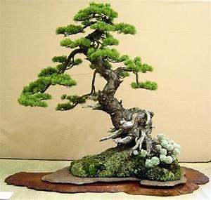 bonsai baum bonsai ein baum f r die wohnung best 20 With garten planen mit bonsai kunst