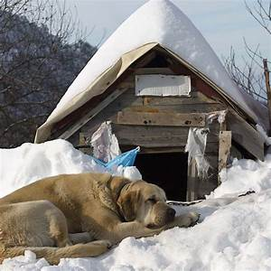 How to keep dog houses warm during winter paw castle for Insulated dog houses for winter