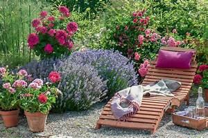 Rosen Und Lavendel : ideen mit lavendel mein sch ner garten ~ Yasmunasinghe.com Haus und Dekorationen