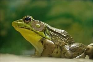 Amphibians Pictures  Images  Photos