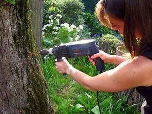 Comment Creuser Un Tronc D Arbre : la d vitalisation d 39 une souche d 39 arbre ~ Melissatoandfro.com Idées de Décoration