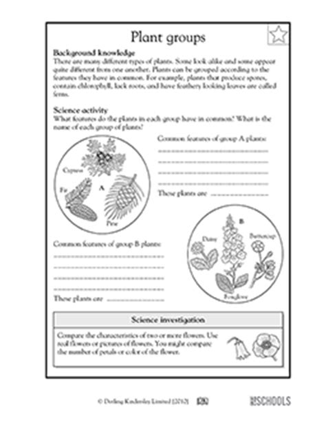 3rd grade 4th grade science worksheets plant groups