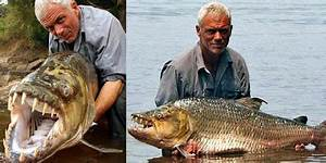 Ikan Piranha Raksasa Pemakan Buaya dan Manusia Di lepaskan ...