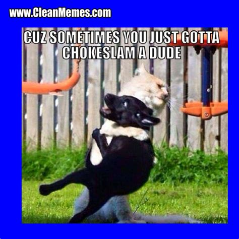 Clean Animal Memes - cat memes clean memes the best the most online page 4