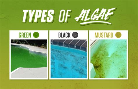 Types Of Pool Algae And How To Eliminate Them