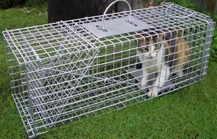 humane traps for cats cat trap rentals