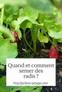 Culture Des Radis : semer des radis m thode et conseils pour r ussir vos semis potager potager garden ~ Melissatoandfro.com Idées de Décoration