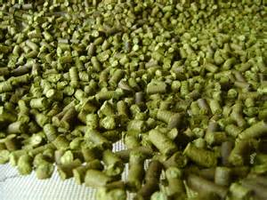 Beer Hops Plants