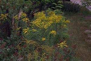 Unkraut Weiße Blüte : unkraut mein sch ner garten forum ~ Lizthompson.info Haus und Dekorationen
