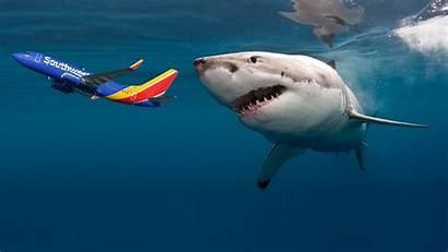 Costa Rica Shark Sharks Bad Airplane Southwest