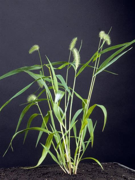 types  weeds hgtv