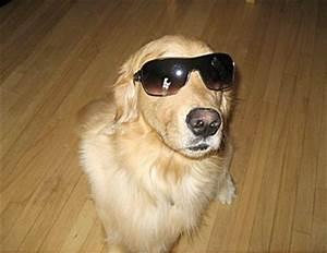conjunctivitis dogs