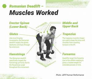 Bench Press Muscles Used Diagram