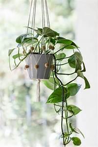 Hängende Pflanzen Für Draußen : 78 best ideen zu blumenampel auf pinterest makramee ~ Sanjose-hotels-ca.com Haus und Dekorationen