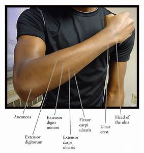 Diagram Of Your Arm