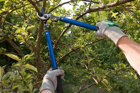 apfelbaum schneiden zeitpunkt apfelbaum schneiden wann ist der beste zeitpunkt