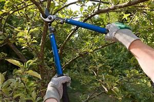 Apfelbaum Schneiden Wann : apfelbaum schneiden wann ist der beste zeitpunkt hauskauf ~ A.2002-acura-tl-radio.info Haus und Dekorationen