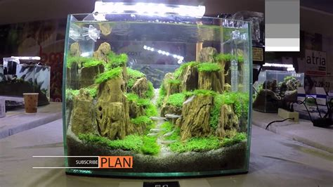 Aquascape Competition by Aquascape Contest A Combat Tank 300