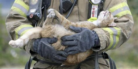Firefighter Saves Cat's Life