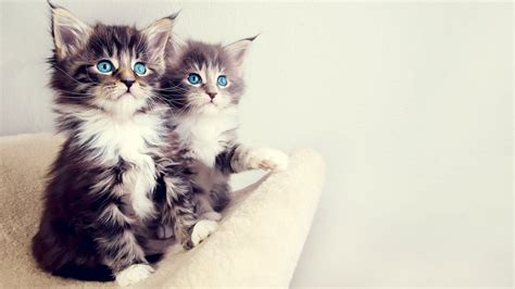 40 Adorable Cat Wallpapers In 1080p