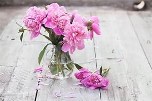 Wann Schneidet Man Rosen Zurück : pfingstrosen in der vase so bleiben sie l nger frisch ~ Orissabook.com Haus und Dekorationen