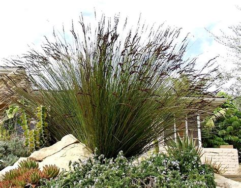 17 Best Images About Lush Water Wise Plants For Southern