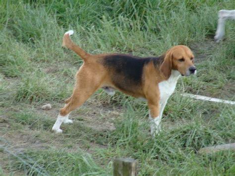 annuaire des races de chien education canine aix