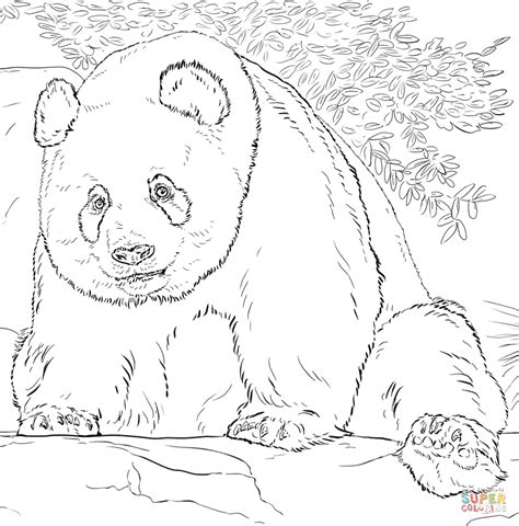 giant panda coloring page  printable coloring pages