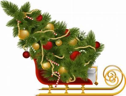 Tree Christmas Pngimg