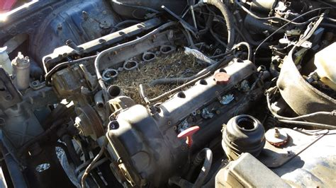 junkyard find  jaguar xjr