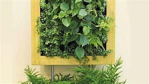 Pflanzenwand Selber Bauen : eine gr ne wand pflanzen so funktionieren vertikale g rten ~ Sanjose-hotels-ca.com Haus und Dekorationen