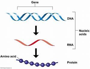 Bio 101 Study Guide  2013-14 Otoshi