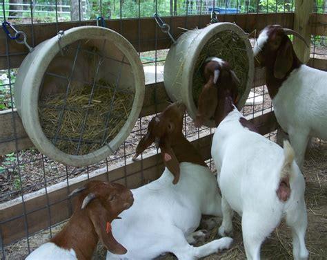 goat hay feeder clear creek farms