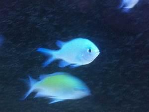 Tiere Für Aquarium : fische archive aquarium perfekt ~ Lizthompson.info Haus und Dekorationen
